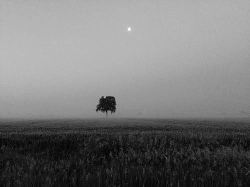 Tree Moon Fog Foggy Landscape Early Morning Field Blackandwhite The Great Outdoors - 2016 EyeEm Awards