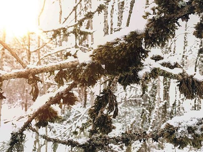 A bit over exposed but whatever :/ Winter Snow Artofvisuals AOV VSCO Iphonography PNW Pacificnorthwest Upperleftusa Photo Perspective Mothernature Nature Instagood Picoftheday Photoftheday Photochallenge Vscovisuals
