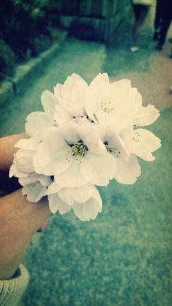 벚꽃이 기다려진다!