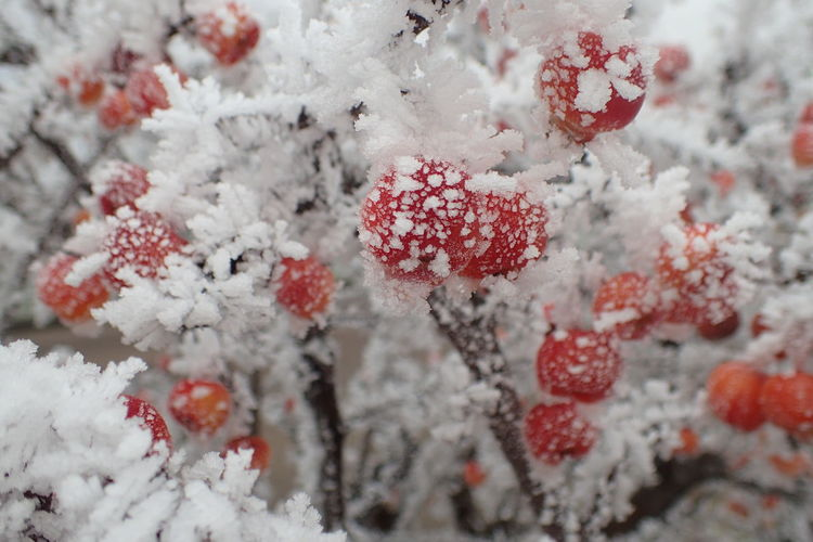 Close-Up Of Frost On Plants