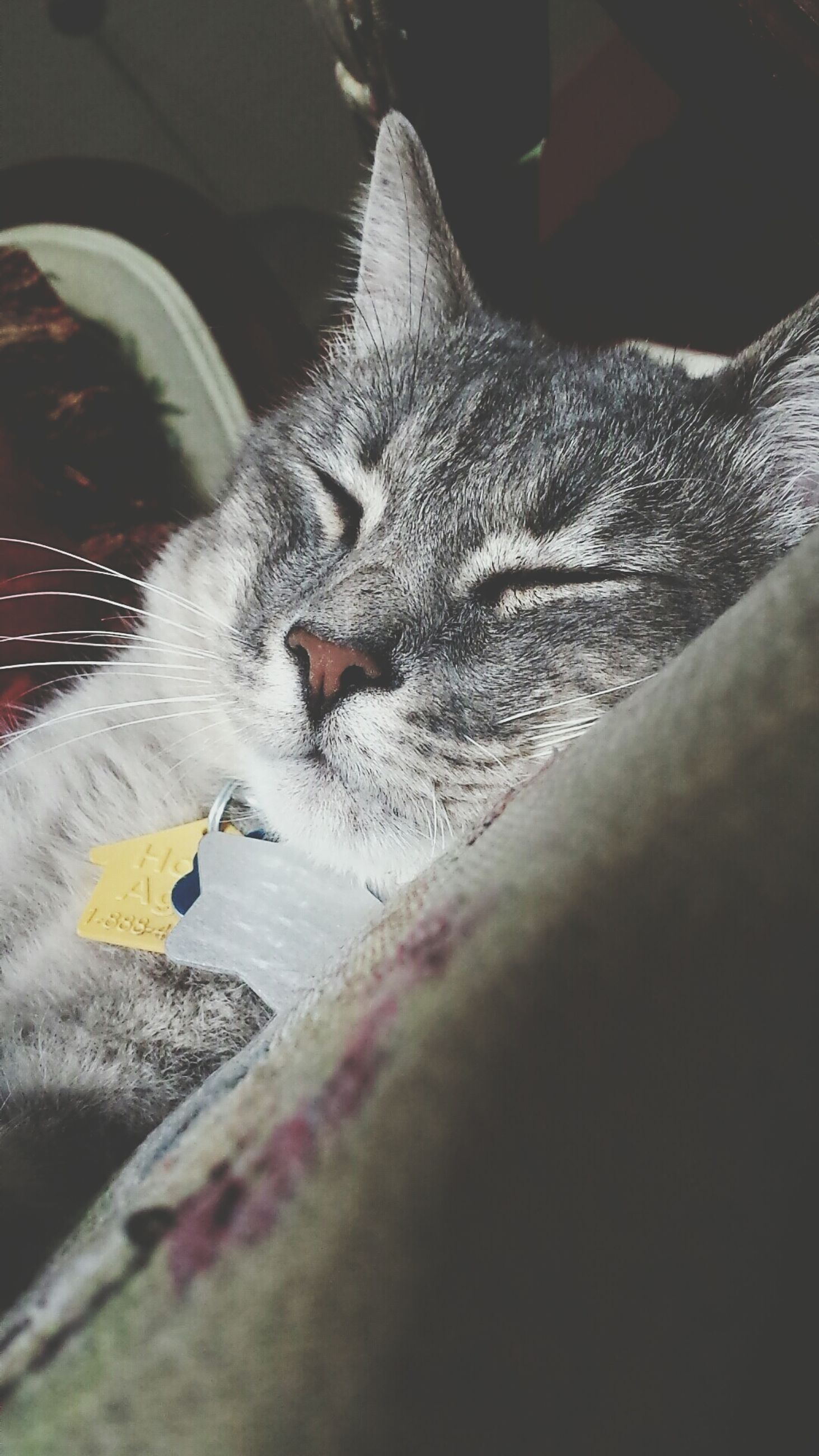 domestic cat, animal themes, pets, domestic animals, one animal, cat, mammal, feline, indoors, relaxation, whisker, lying down, resting, sleeping, home interior, bed, high angle view, no people, selective focus, eyes closed