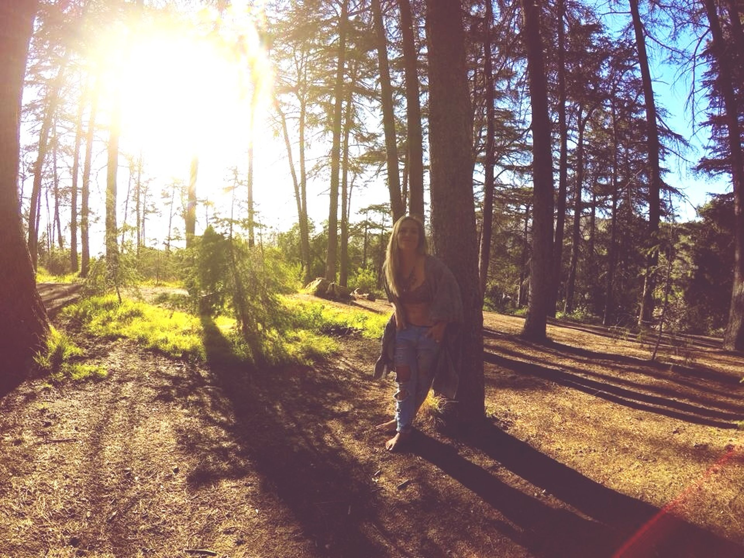 tree, sunbeam, sunlight, sun, lens flare, tree trunk, nature, field, landscape, tranquility, forest, growth, sunny, day, tranquil scene, outdoors, grass, shadow