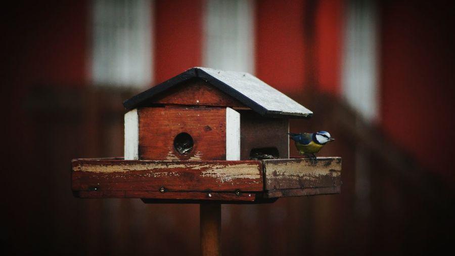 Close-up of bird on birdhouse