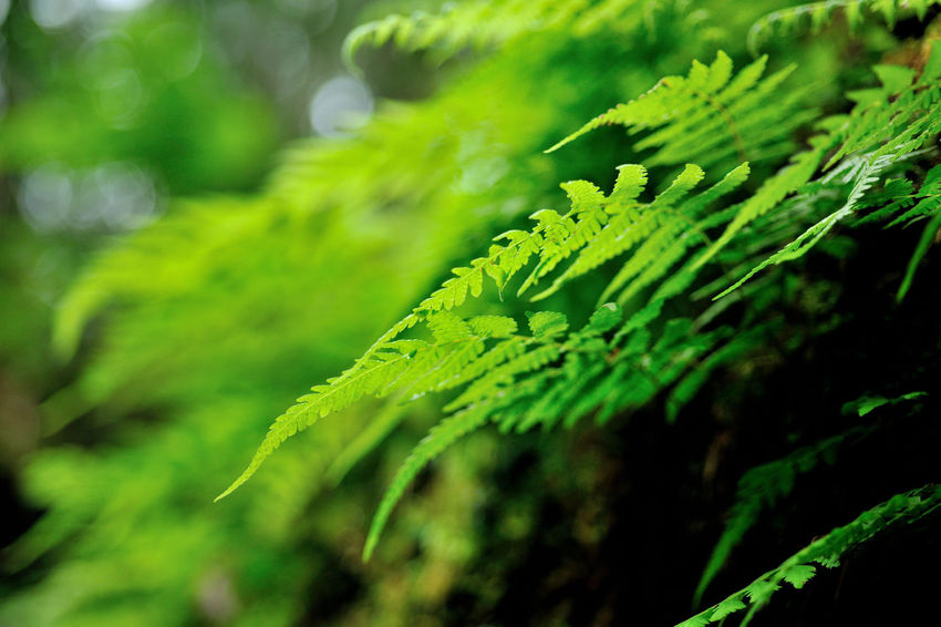 Flora in the ferns, growing dense. Green Growth Natural Natural Beauty Nature Beauty In Nature Close-up Day Expand Fern Ferns Freshness Grass Green Color Growth Leaf Nature No People Outdoors Plant Plant Kingdom Selective Focus