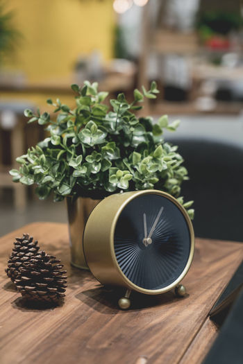 Close-up of clock with potted plant and pine cone on table