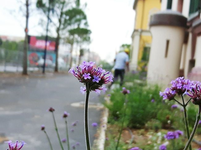 Day Human Urban Landscape City Building Construction Road Flower Head Flower Purple Pink Color Petal Close-up Plant Lilac In Bloom Blooming Flowering Plant Botany HUAWEI Photo Award: After Dark #urbanana: The Urban Playground