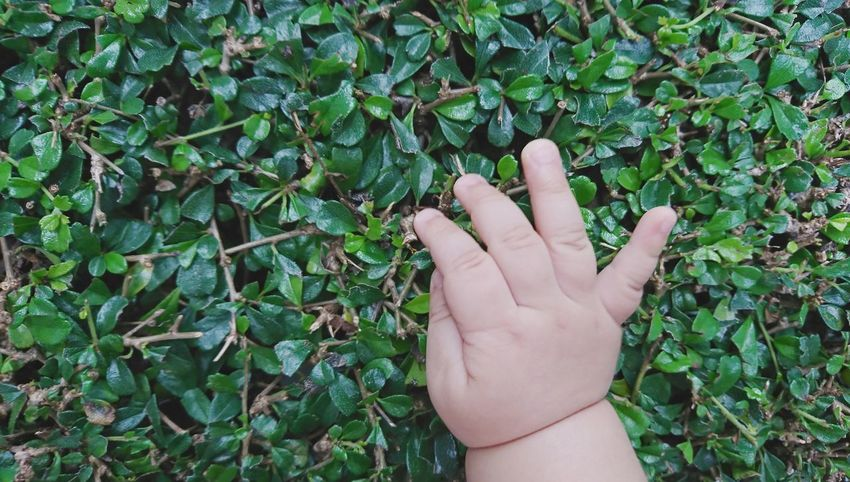 Human Hand Human Body Part Human Finger One Person Green Color Day Outdoors Leaf Nature Plant Close-up Baby Hand Young Innocent Close To Nature Refresh Cute Child Playful