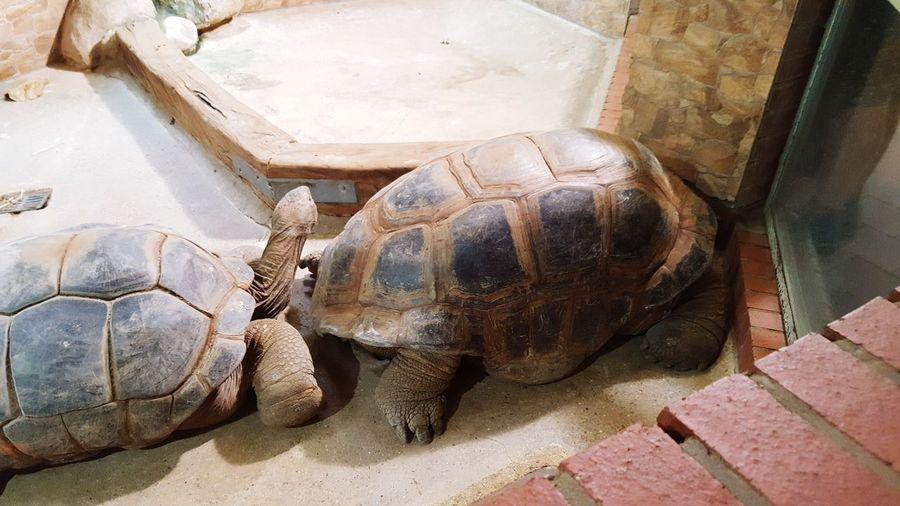 #tier #Schildkröte #schönheit #handykamera First Eyeem Photo