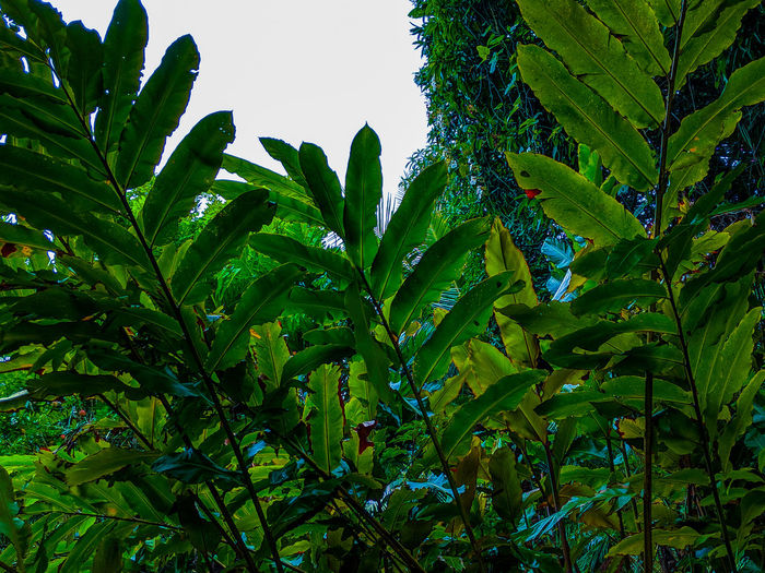 lush Tree Leaf
