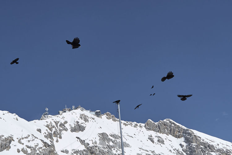 Low angle view of birds flying over snowcapped mountain against sky