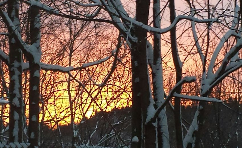 wintery sunset behind hill in background and trees in foreground. Auburn, Maine, USA