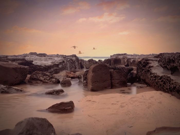 Flying Bird Sky Water Beauty In Nature Rock Scenics - Nature Rock - Object Land Beach Nature Solid No People Outdoors Rock Formation Tranquil Scene Idyllic Tranquility Sunset Sea Cloud - Sky
