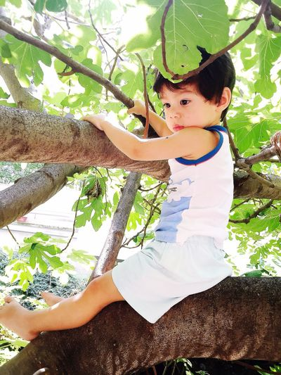 Son Baby Figgtree Green Park Summertime Cute Boy Budapest Hungary