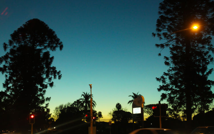 On the road home Beauty In Nature Clear Sky Growth Illuminated Low Angle View Nature Night No People Outdoors Palm Tree Perth Silhouette Sky Tree
