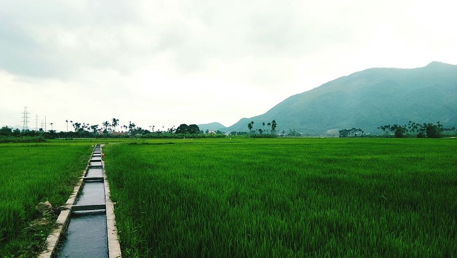Agriculture Field Rural Scene Nature Landscape Beauty In Nature Tranquility Rice Paddy Cloud - Sky Scenics Social Issues Tranquil Scene Outdoors No People Rice - Cereal Plant Sky Growth Mountain Day