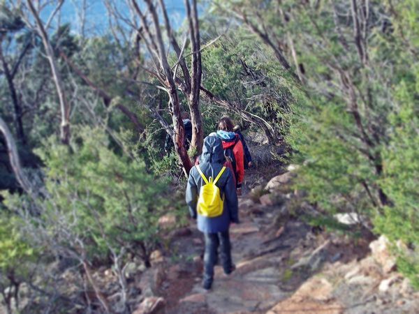 Freycinet NP, Coles Bay Adult Adults Only Adventure Beauty In Nature Climbing Day Forest Freycinet National Park Full Length Hiking Hiking Hiking Trail Leisure Activity Lifestyles Men Nature Only Men Outdoor Pursuit Outdoors People Rear View Rock - Object Sports Clothing Tasmania Tree
