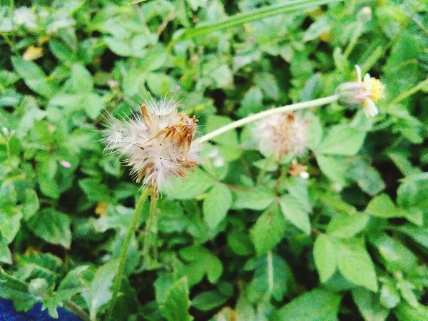Flower Fragility Dandelion Plant Flower Head Growth Nature Day Freshness Close-up No People Outdoors Beauty In Nature