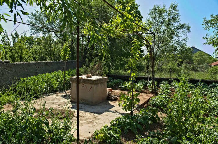 Water well and small garden around it Container Beauty In Nature Cultivating Day Garden Green Color Growth Nature No People Outdoors Plant Preserving Rural Scene Sky Sunlight Tree Vegetables Water Well