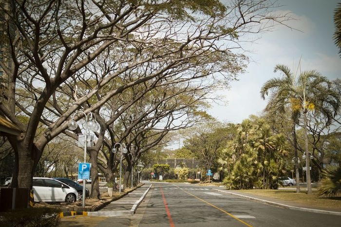 I miss this place. Tree Outdoors Growth The Way Forward Nature Day No People Branches EyeEm Best Shots Eyeem Philippines Nikon D3100 Nikonphotography Nikonlens Meralco Pasig City Metro Manila Philippines