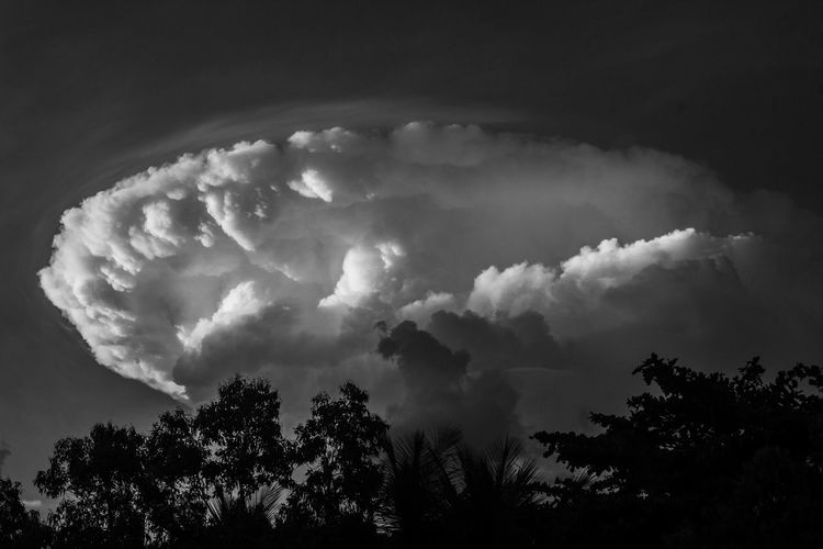 Cloud Bomb Beauty In Nature Black And White Blackandwhite Cloud - Sky Day Growth Julhofragaphotography Low Angle View Nature No People Outdoors Scenics Sky Tranquility Tree