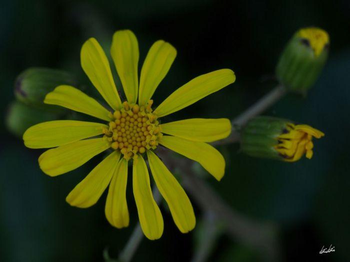 優しさは強さ E-PL3 Flower No Edit/no Filter