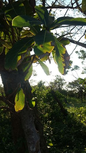 Tree Green Color Growth Nature Leaf Outdoors