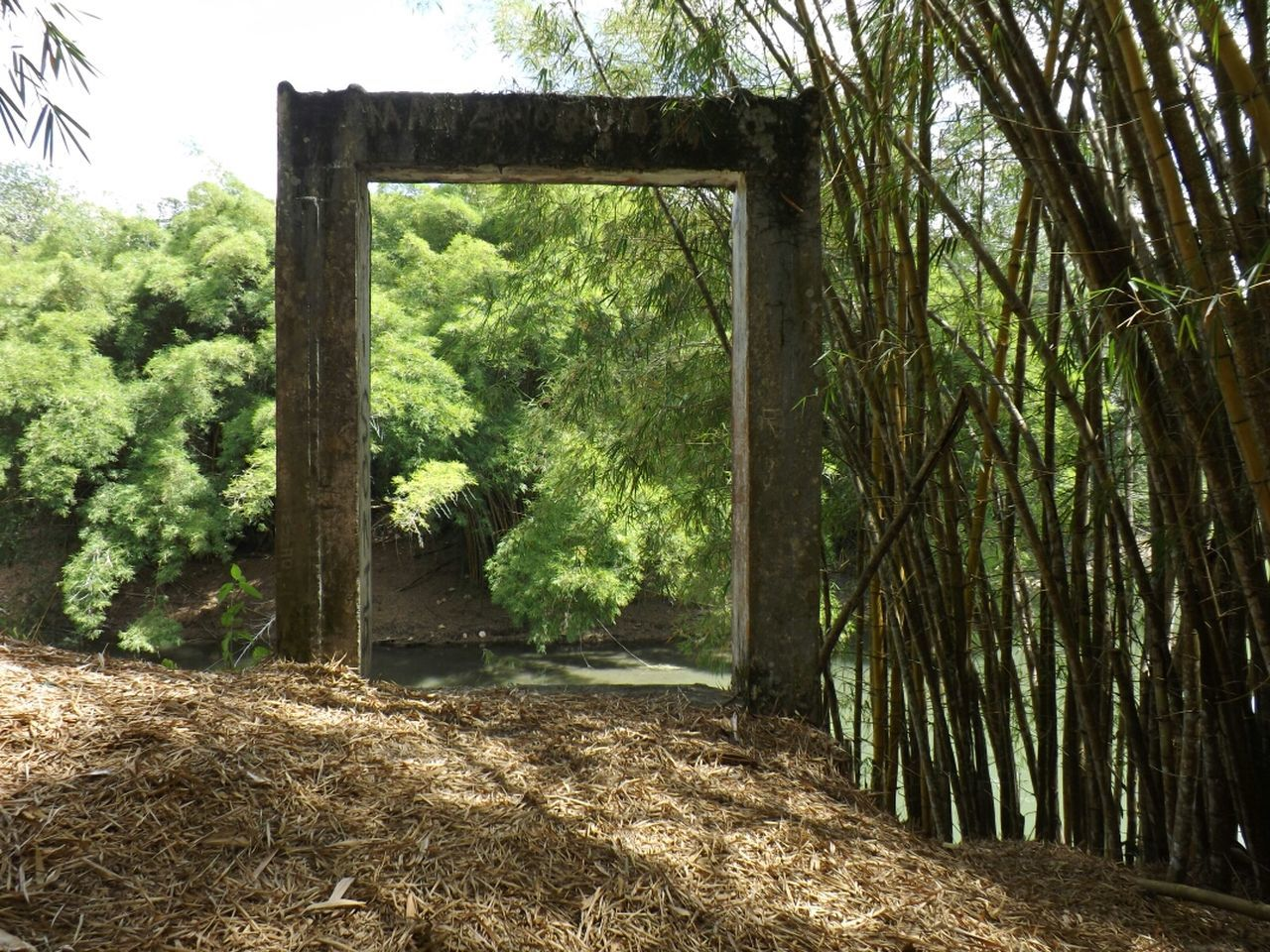 Concrete frame and bamboo trees by stream