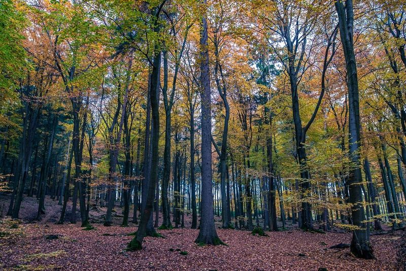 Tree Nature Forest Autumn Outdoors Beauty In Nature Landscape No People Scenics