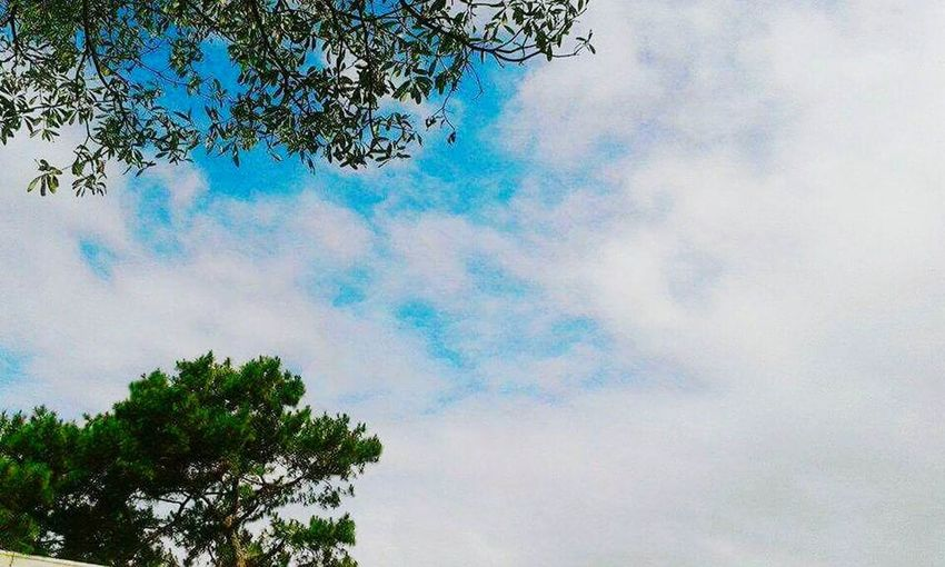 Tree Cloud - Sky Sky Nature Day Tranquility No People Outdoors Low Angle View Growth Beauty In Nature Multi Colored Mammal Mammal Day Outdoors First Eyeem Photo Close-up Portrait Lying Down Looking At Camera Animal Themes Domestic Animals One Animal Dog Pets
