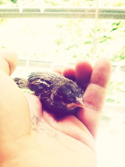 the lost art of rescuing birds