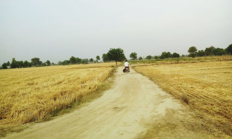 Road Bike From My Point Of View Beauty In Nature Agricultural Land Agriculture Photography Agriculture Way Crops Dry Farming Trees And Sky The Great Outdoors - 2016 EyeEm Awards The Street Photographer - 2016 EyeEm Awards Original Experiences Wheat Field 43 Golden Moments Feel The Journey at Haryana India