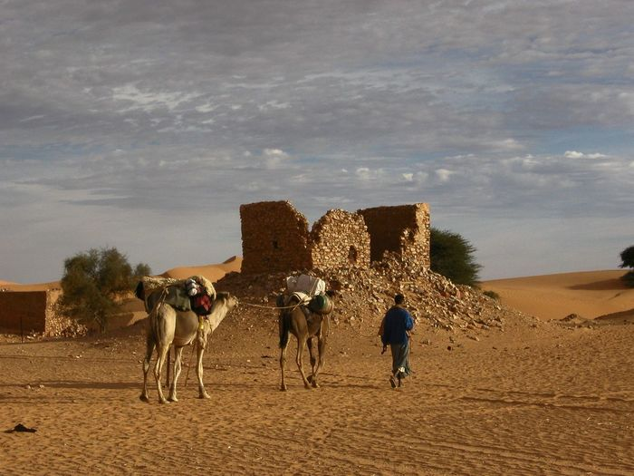 Architecture Beauty In Nature Camel Caravan Cloud - Sky Day Desert Domestic Animals Lifestyles Livestock Mammal Men Nature Outdoors Real People Rear View Sahara Sky Tree Working Animal