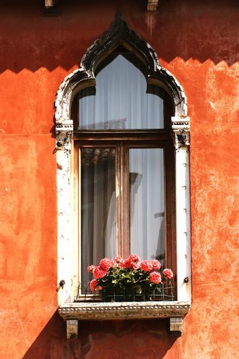 Flowers on window sill of house