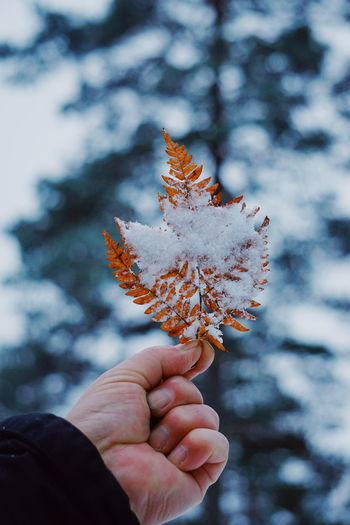 Close-up of hand holding flower during winter