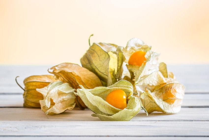 Cape gooseberries on a wooden table Food Table Wooden Orange Healthy Berries Golden Cape Gooseberry Still Life Food And Drink Freshness Healthy Eating Table Food No People White Background Indoors  Close-up Day Beach