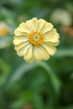 Flower Flowering Plant Freshness Plant Yellow Beauty In Nature Fragility Close-up Vulnerability  Flower Head Inflorescence Growth Petal Focus On Foreground Nature Day No People Outdoors Pollen