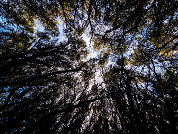 Looking up Backgrounds Day Forest Growth Land Low Angle View Nature No People Outdoors Plant Sky Tree Tree Canopy  Tree Trunk Trunk Growing Tree Canopy  Treetop WoodLand