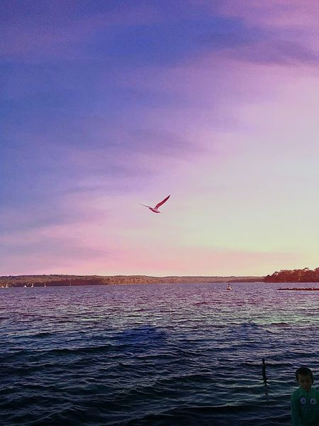 Lakeview Australia❤Bliss❤ SEAGULL IN FLIGHT Lakeside Living Lakeside Is Bliss!❤ Lakeshore Landscapes And Lakeviews EyeEm Best Shots Taking Photos From My Point Of View EyeEm Nature Lover Tadaa Community Tadaa