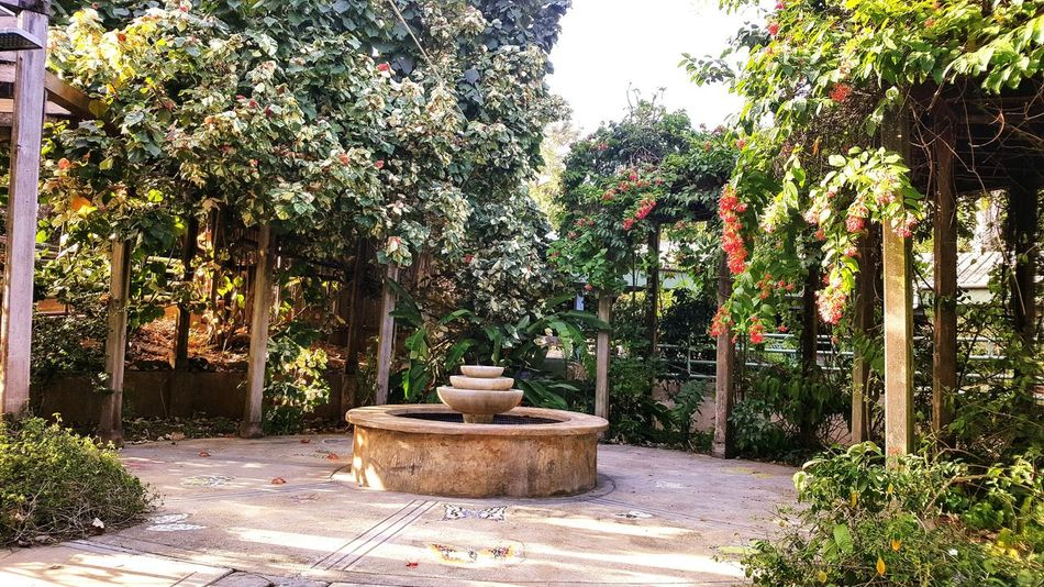 Gem in the middle of the zoo Sunlight Tranquility Fountain Nature Growth Plant Beauty In Nature Day Outdoors Tree No People Pottery Freshness Branches Greenry Plants And Flowers The Secret Spaces