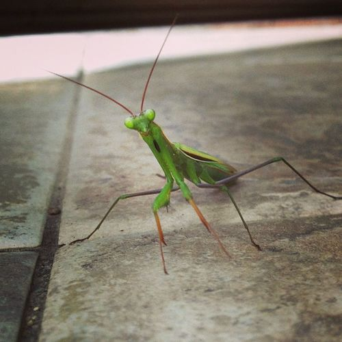 -чё надо?))) Green Animal Portrait Beautiful Nature Nature Taking Photos Insects