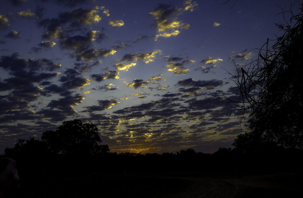 Game Drive Beauty In Nature Cloud - Sky Environment Idyllic Land Landscape Low Angle View Nature No People Non-urban Scene Outdoors Plant Safari Scenics - Nature Silhouette Sky Sunrise Tranquil Scene Tranquility Tree HUAWEI Photo Award: After Dark