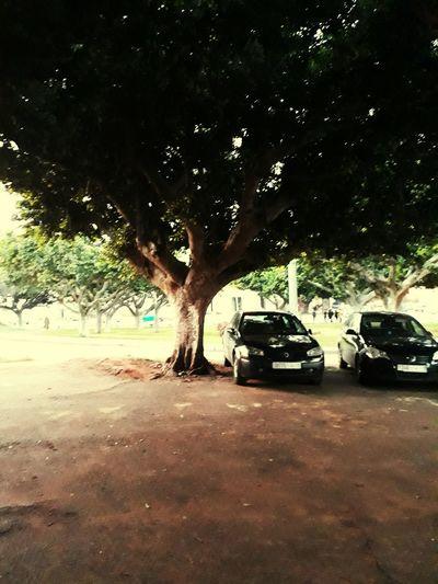 No People Nature Outdoors Day Tree EyeEmNewHere City ☃ Be. Ready. Samsun Rabat City ❤❤ Medina Twarga Rabat Morroco❤