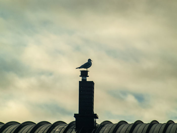 Low angle view of seagull perching on roof against building