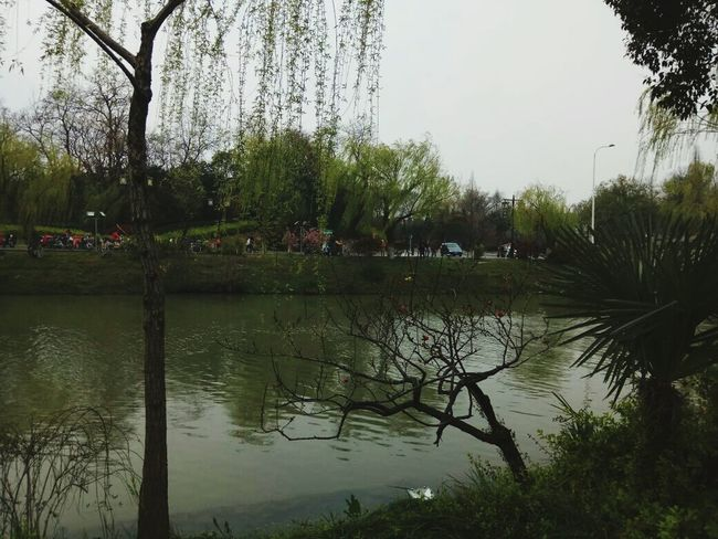 EyeEmNewHere Reflection Water Lake Tree Nature Outdoors Sky Day Tranquility Flood Growth Beauty In Nature No People Grass