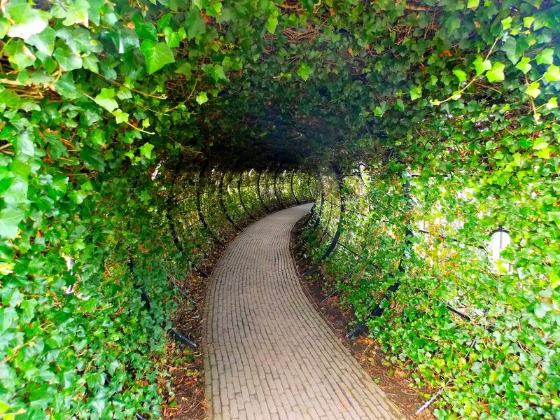 Day Freshness Garden Path Green Color Growth Leaf Nature No People Outdoors Plant