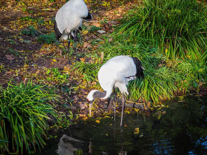 White bird on grass by water