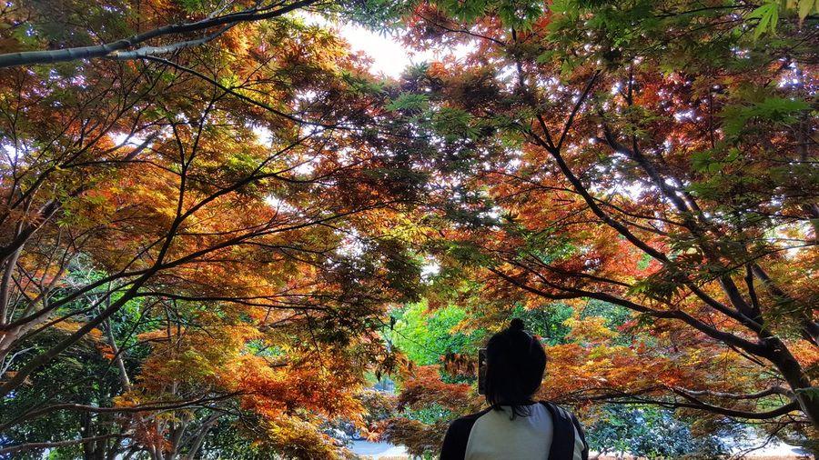 Foliage Outdoor