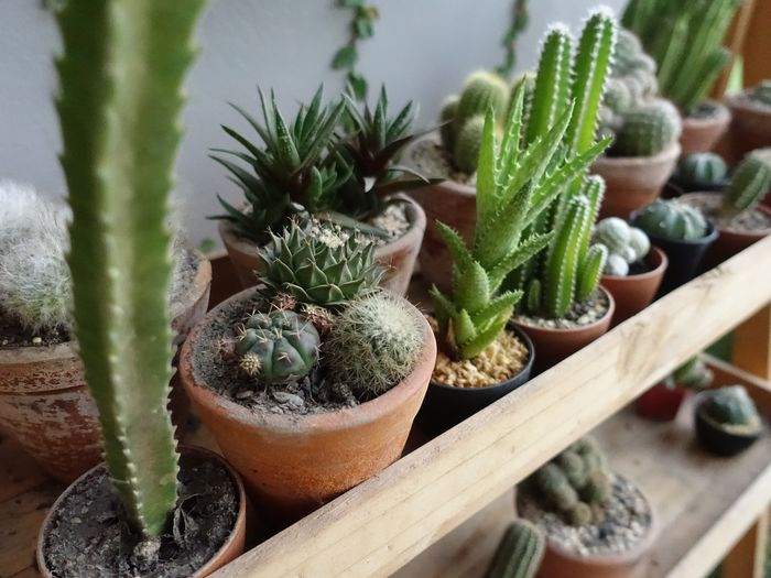 Potted Plant Leaf No People Outdoors Plant Life Green Color Wooden Table Cactus Water Thorn Potted Plant Close-up Plant Growing Young Plant