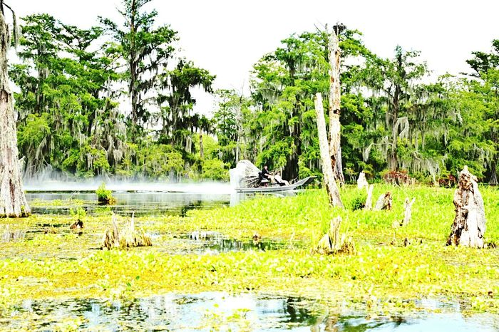 Noisey airboat Clouds And Sky Taking Photos Daylight Greenery Lake Airboat Rides On The Swamps South Louisiana Greenery Scenery Spanish Moss Reflections In The Water Water Sunnyday☀️ Spanishmoss Lake Martin it was no longer serene when it come on the scene!!