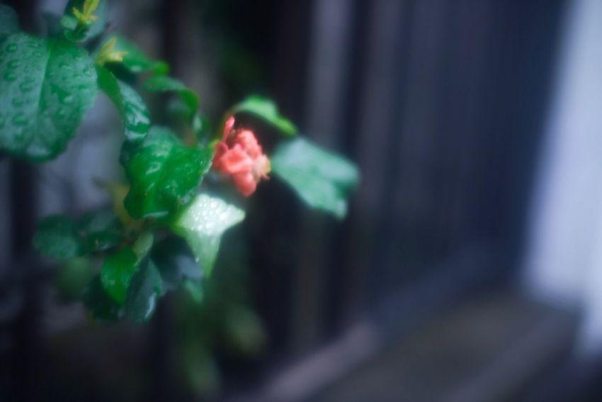 """""""ひとりでも大丈夫"""" """"Everything is OK, even if you are alone"""" Snapshots Of Life Japan Nature Green Rainy Days Color Red Mist Dreaming Flowers Getting Inspired Alone Alone But Not Lonely"""